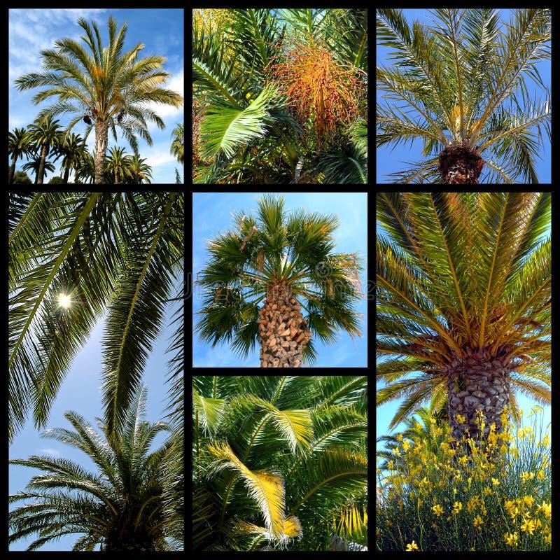 Mosaico delle palme immagine stock libera da diritti