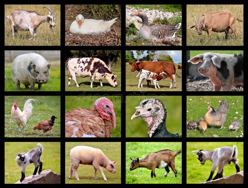 Mosaik för lantgårddjur arkivbild