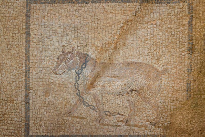 Mosaiken i fördärvar av den romerska villan i den forntida staden av Lilibeo royaltyfri bild