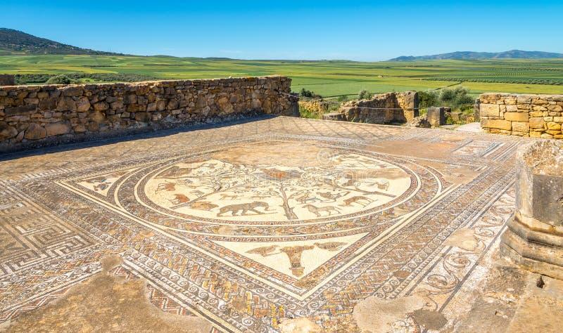 Mosaiken i hus av Orpheus fördärvar in den forntida staden Volubilis, Marocko royaltyfria bilder