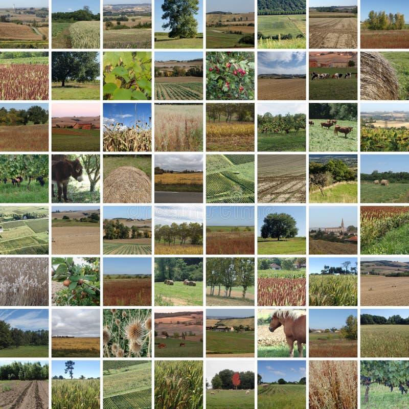 Mosaique del campo de la caída foto de archivo libre de regalías
