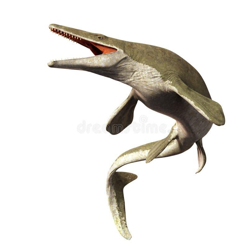 Mosasaurus, 17m aquatische hagedis, tussen 70 en 66 die miljoen jaren geleden 3d illustratie op witte achtergrond wordt geïsoleer stock illustratie