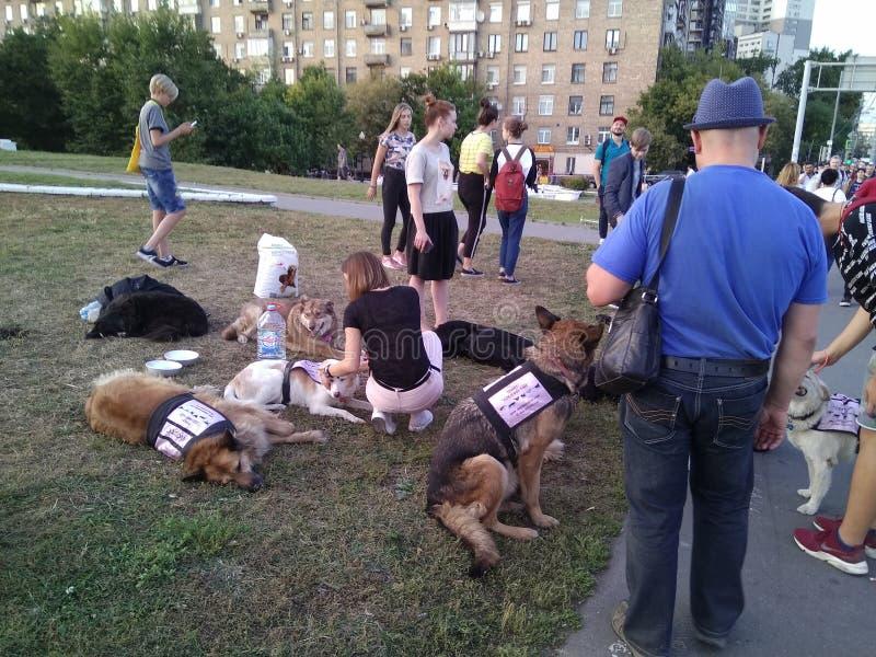 Moscú, Rusia, el 29 de agosto de 2018, los voluntarios recoge las donaciones para el DOS perdido fotografía de archivo