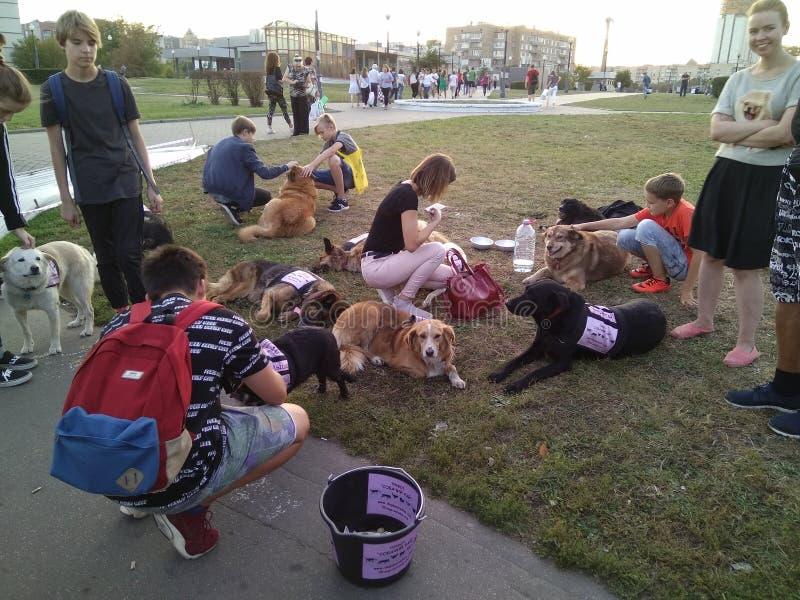 Moscú, Rusia, el 29 de agosto de 2018, los voluntarios recoge las donaciones para el DOS perdido foto de archivo
