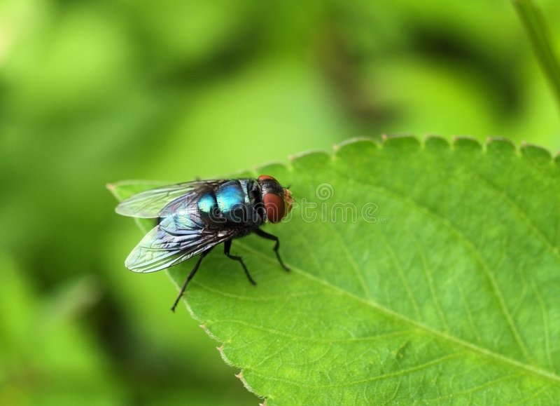 A mosca imagem de stock