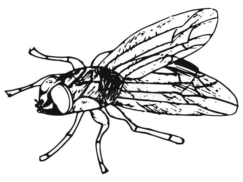 mosca illustrazione di stock