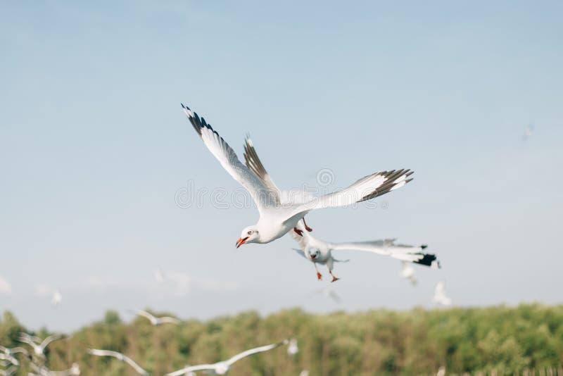 Mosca da gaivota em Bangpoo, Tailândia imagens de stock royalty free
