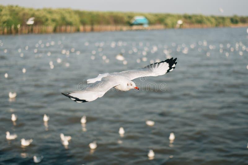 Mosca da gaivota em Bangpoo, Tailândia fotos de stock