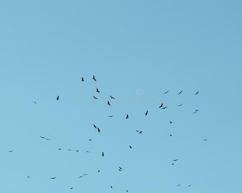Mosca das caraíbas da gaivota livremente no céu imagens de stock royalty free