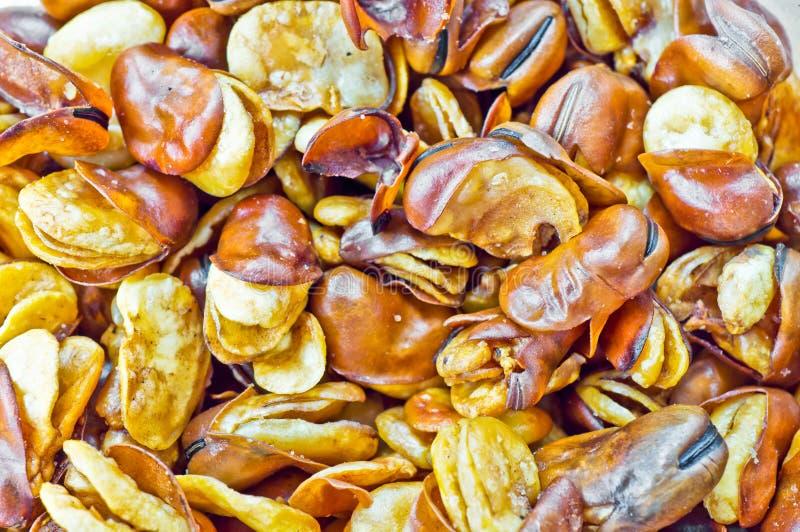 Mosca de feijão largo imagens de stock