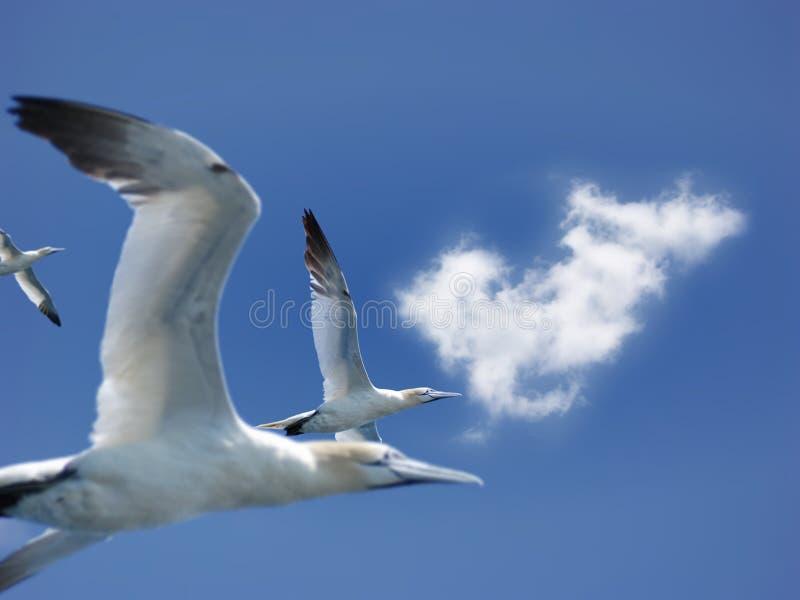 Mosca de gannets do norte imagem de stock royalty free