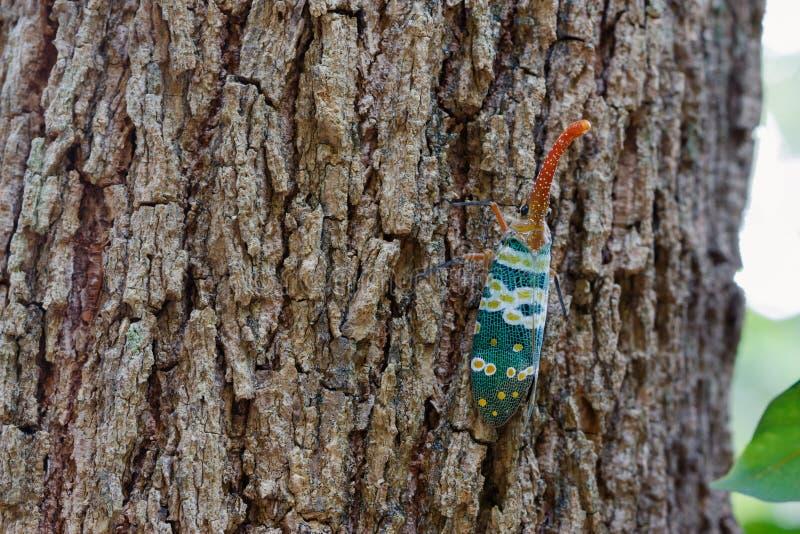 Mosca de la cigarra o de linterna en árbol fotografía de archivo