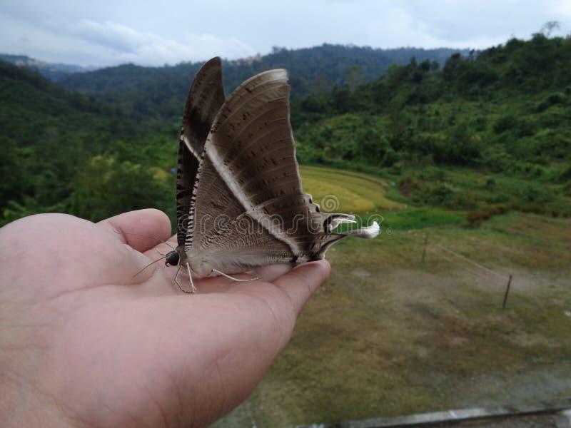 Mosca de la mariposa ausente fotografía de archivo