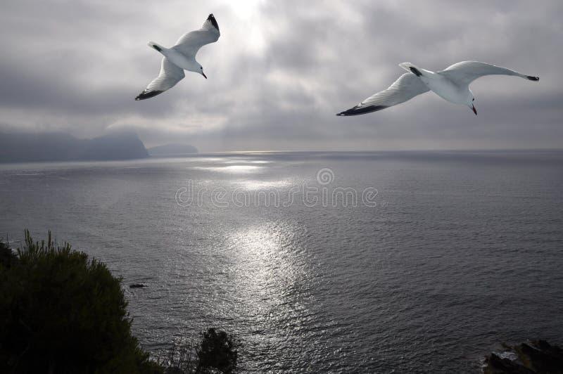 Mosca de Segull en el mar foto de archivo