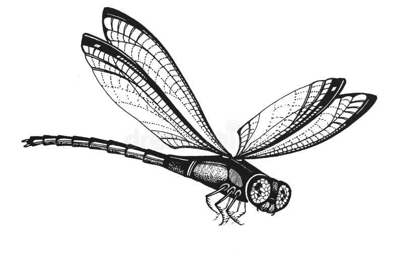 Mosca del dragón ilustración del vector