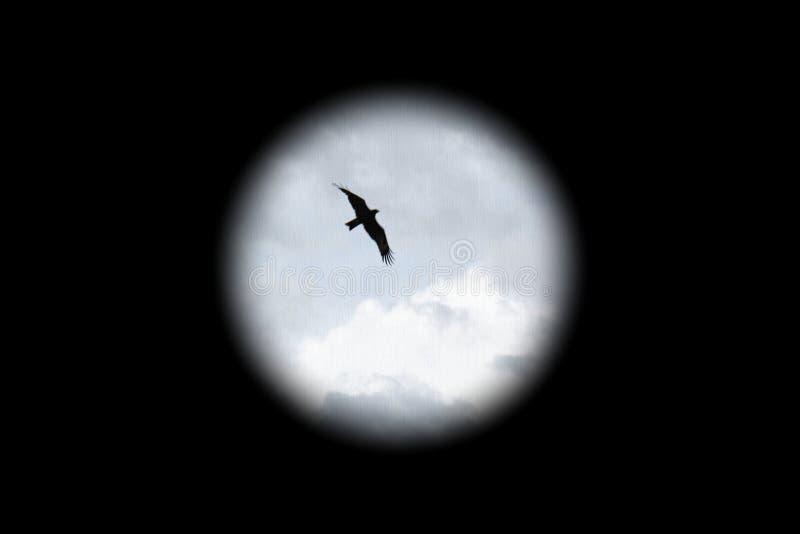 Mosca del pájaro en el cielo y el fondo negro foto de archivo