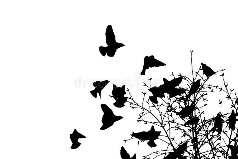 Mosca del waxwing bohemio hasta árbol Silueta del vector una multitud de pájaros ilustración del vector