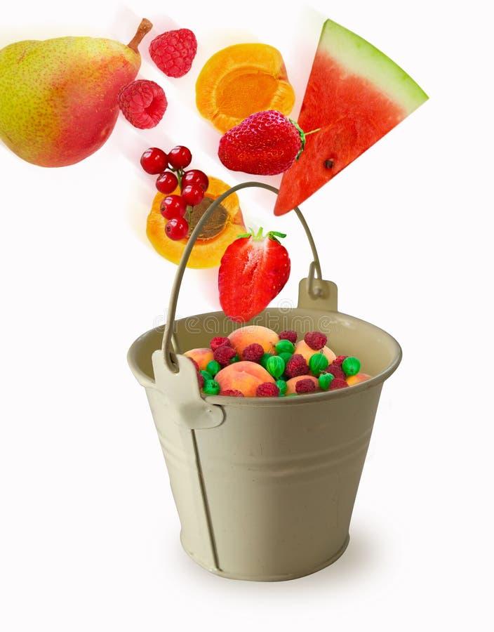 Mosca della frutta in un secchio su un fondo bianco fotografia stock libera da diritti