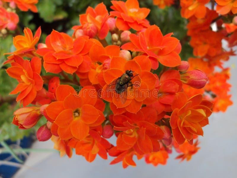 A mosca e as flores fotos de stock royalty free