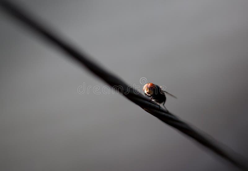 Download Mosca Em Uma Linha De Roupa Foto de Stock - Imagem de inseto, cinzento: 12804440
