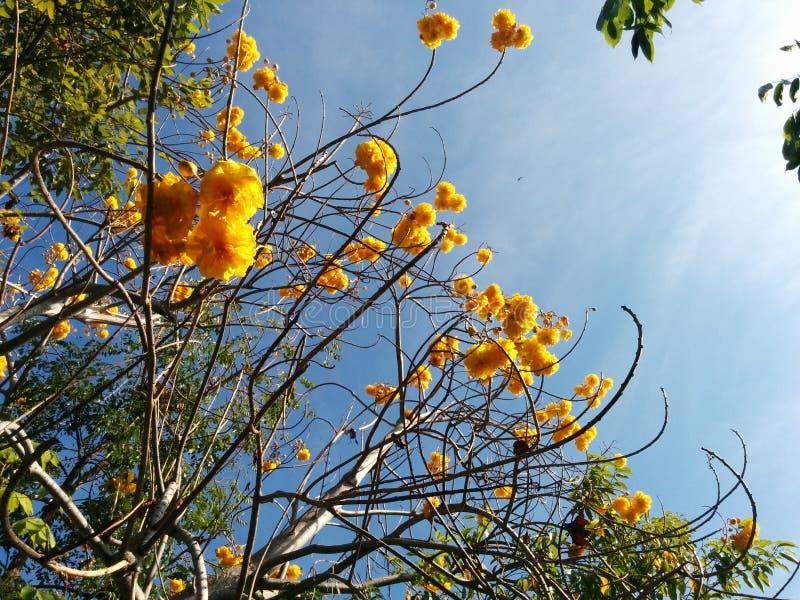 Mosca gialla del flowwer alta al cielo fotografia stock libera da diritti