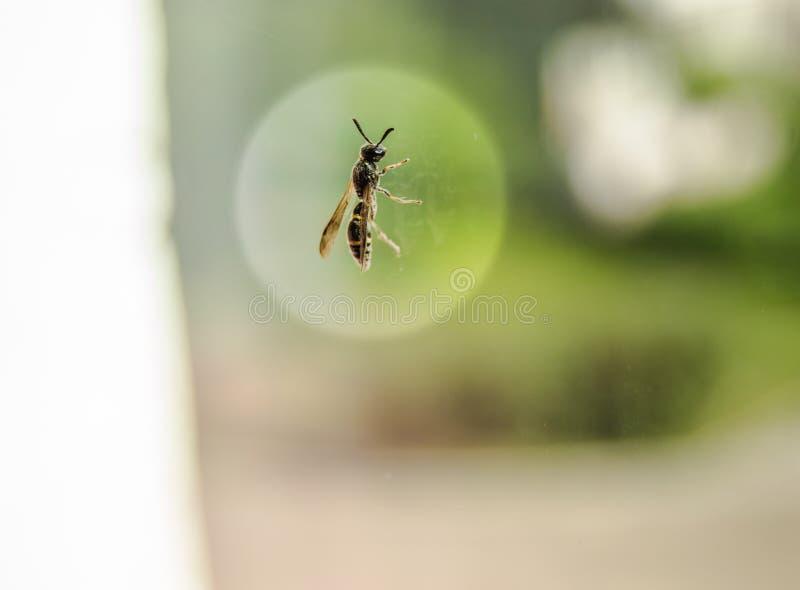 Mosca que senta-se na janela no vidro em um halo redondo branco, proteção do inseto em uma construção residencial fotos de stock royalty free