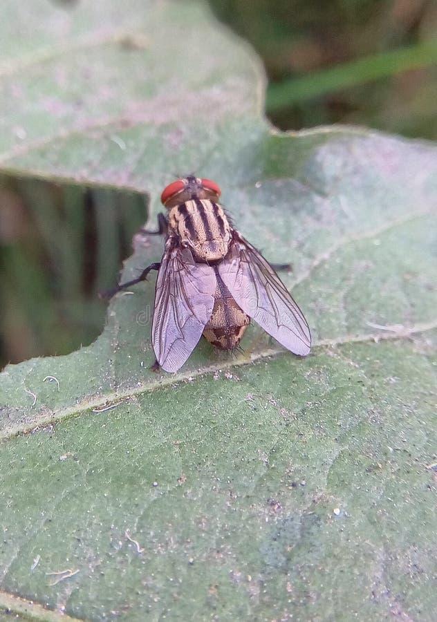 A mosca que senta-se no geen a folha fotografia de stock royalty free