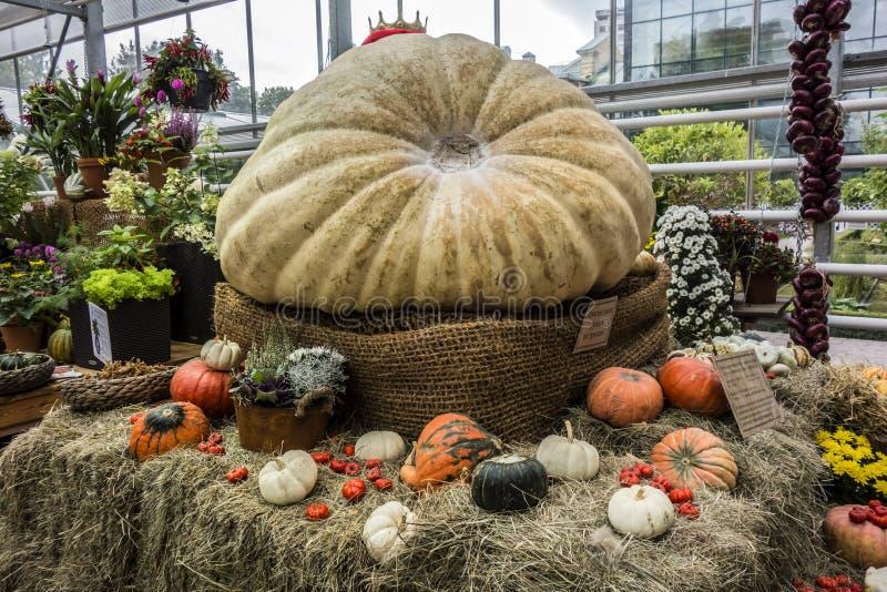 Mosca, Russia - 18 settembre 2017: La più grande zucca in Russ fotografia stock