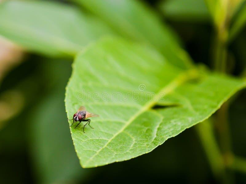 moscas imagen de archivo libre de regalías