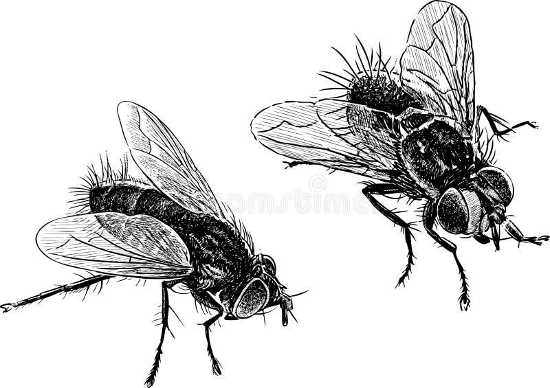 moscas ilustração royalty free