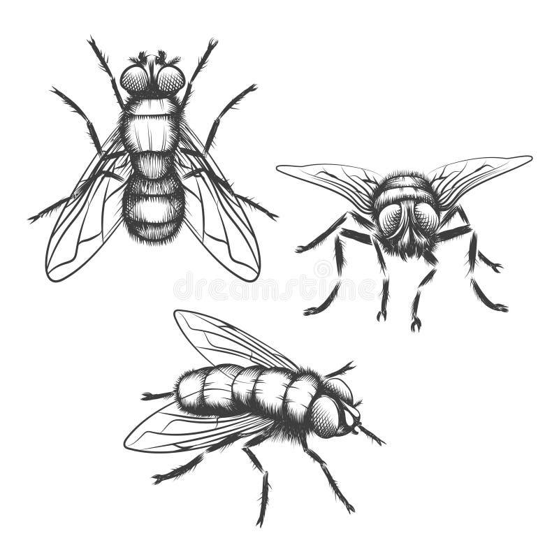 Moscas dibujadas mano ilustración del vector