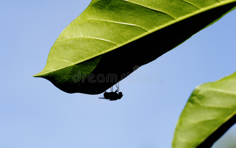 Moscas en hojas verdes fotografía de archivo libre de regalías