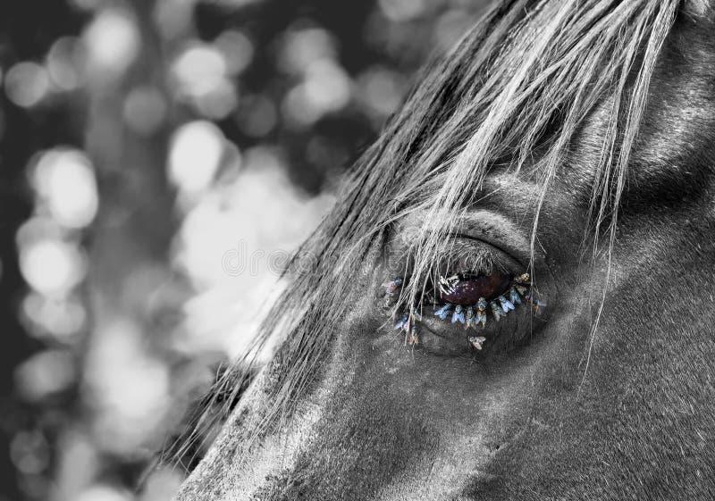 Moscas en un ojo del caballo foto de archivo