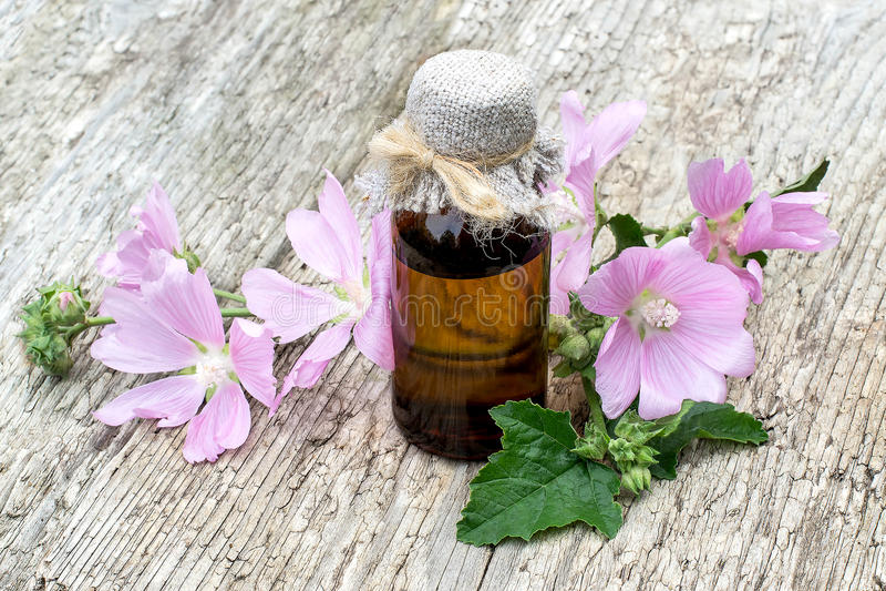 Moschata del Malva de la planta medicinal y botella farmacéutica imagenes de archivo