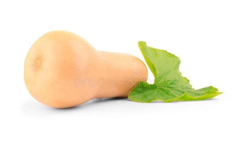 Moschata mûr de cucurbita de potiron de butternut avec la feuille verte d'isolement sur le fond blanc photos libres de droits