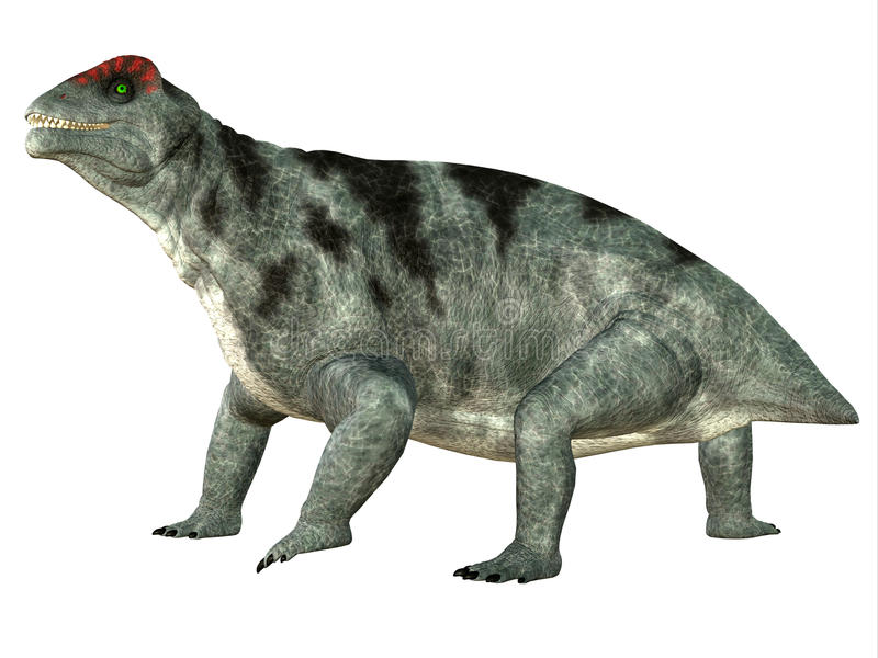 Moschops Side Profile. Moschops was a primeval herbivorous dinosaur that lived in South Africa in the Permian Period vector illustration