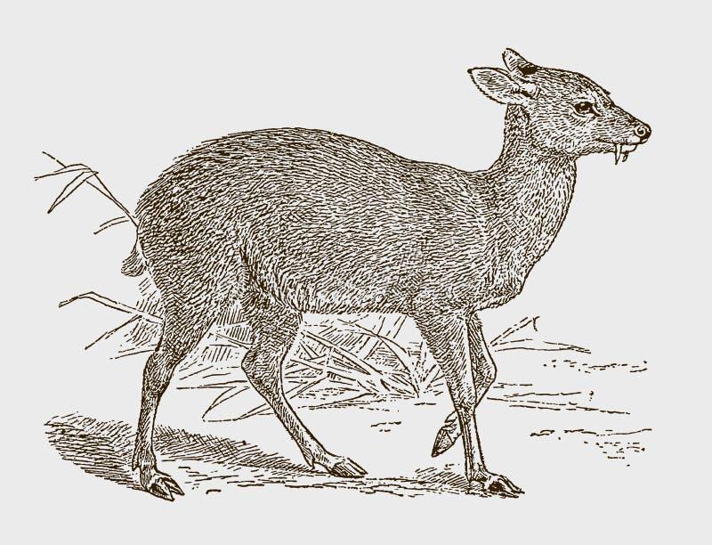Moschus moschiferus, il muschio siberiano minacciato illustrazione vettoriale