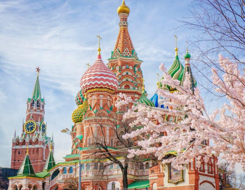 Moscou et St Basil Cathedral à la journée de printemps par l'arbre de floraison photo libre de droits
