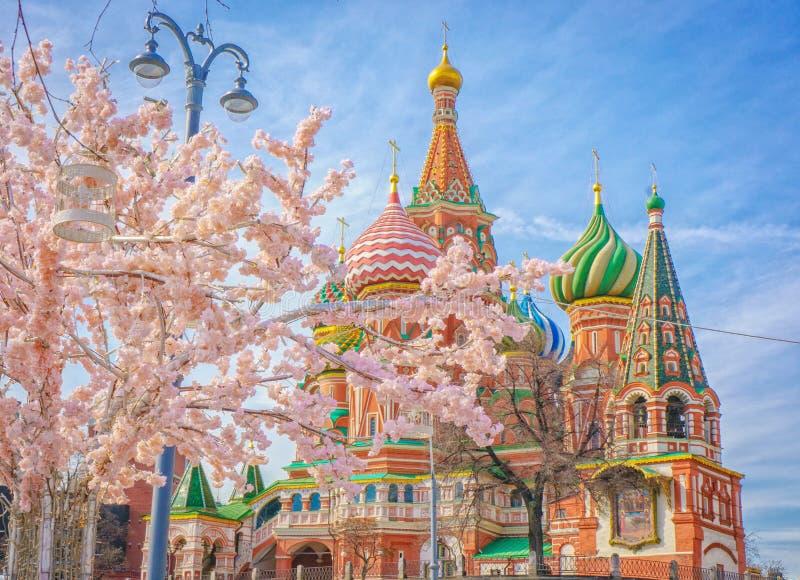 Moscou et St Basil Cathedral à la journée de printemps par l'arbre de floraison images stock