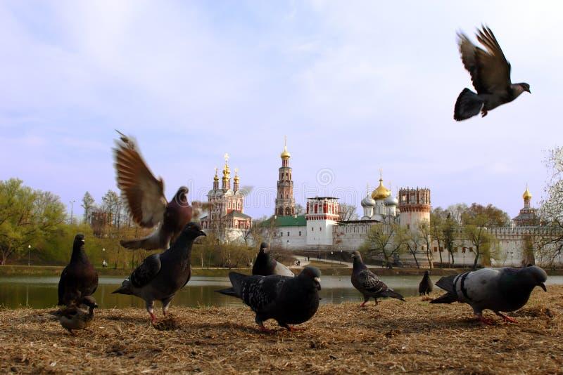 Moscovo, convento de Novodevichiy, mergulhou fotos de stock