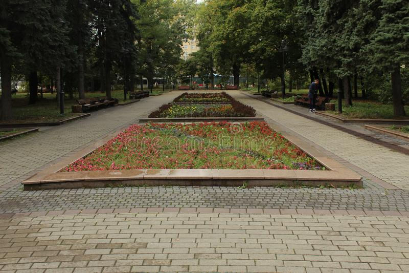 Октябрь 2018 E moscow Район Voykovsky Парк Vorovskogo Розы стоковая фотография rf