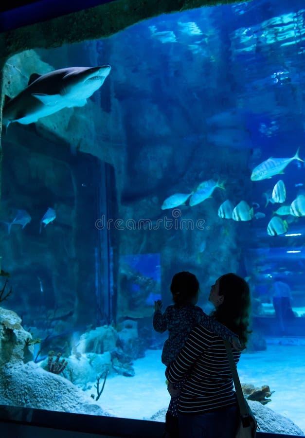 Family looks at big shark in beautiful blue aquarium stock photo