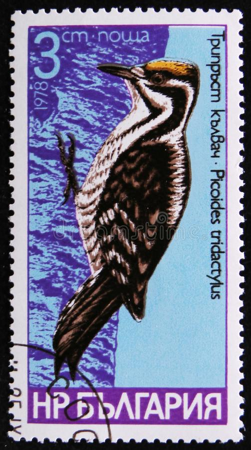 Bird species of woodpeckers, Picoides tridactylus, circa 1978. MOSCOW, RUSSIA - APRIL 2, 2017: A post stamp printed in Bulgaria shows series of images `Bird stock image