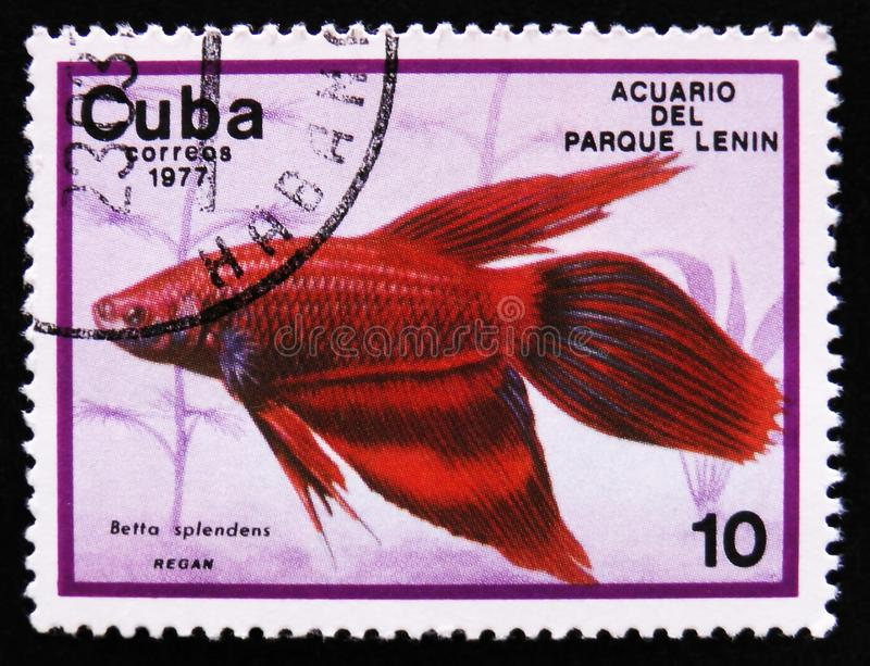 Betta splendens, Lenin Park Aquarium, Havana, circa 1977. MOSCOW, RUSSIA - APRIL 2, 2017: A post stamp printed in Cuba show the fish with the inscription Betta stock images