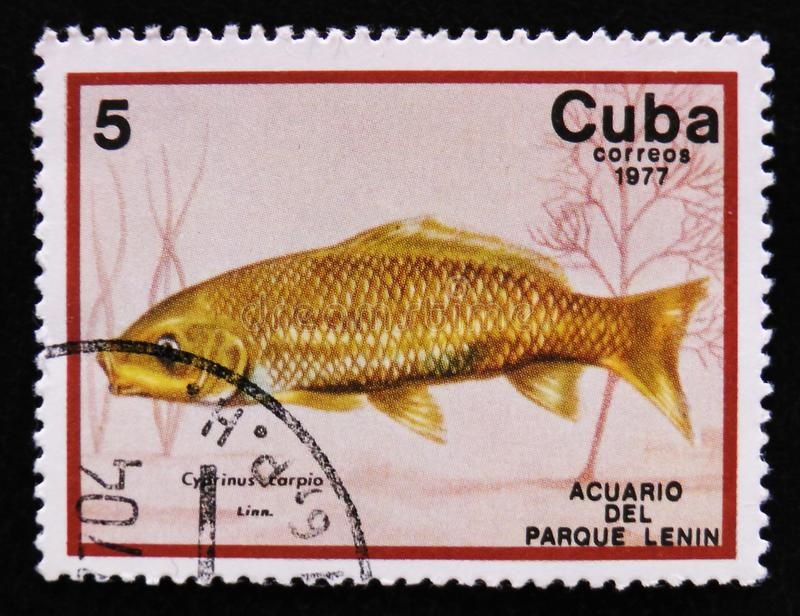 Cyprinus carpio, Lenin Park Aquarium, Havana, circa 1977. MOSCOW, RUSSIA - APRIL 2, 2017: A post stamp printed in Cuba show the fish with the inscription royalty free stock images
