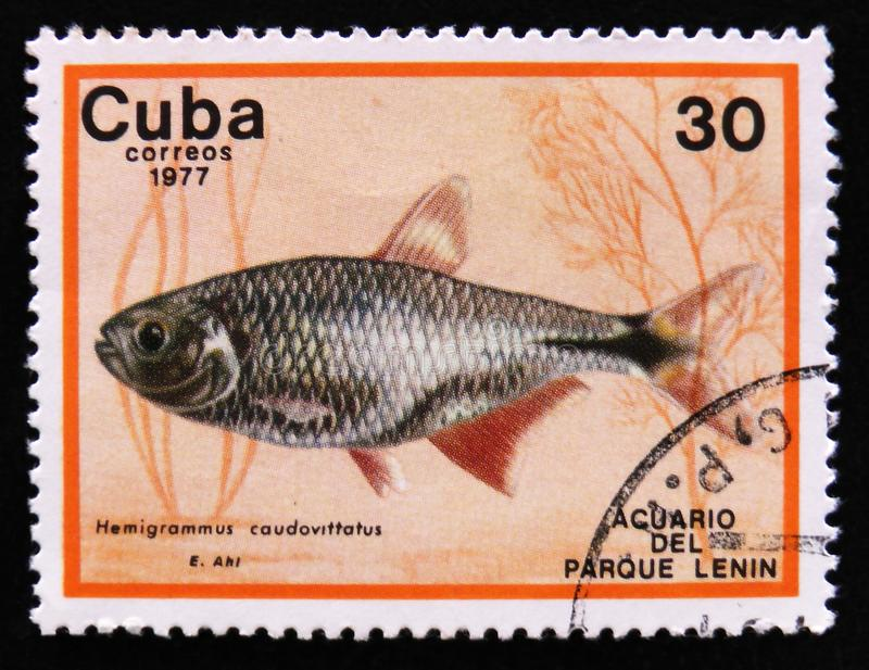 Hemigrammus caudovittatus, Lenin Park Aquarium, Havana, circa 1977. MOSCOW, RUSSIA - APRIL 2, 2017: A post stamp printed in Cuba show the fish with the royalty free stock photo