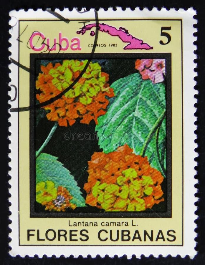 Cuba postage stamp shows Lantana camara and map of Cuba, serie Flowers of Cuba, circa 1983 stock images