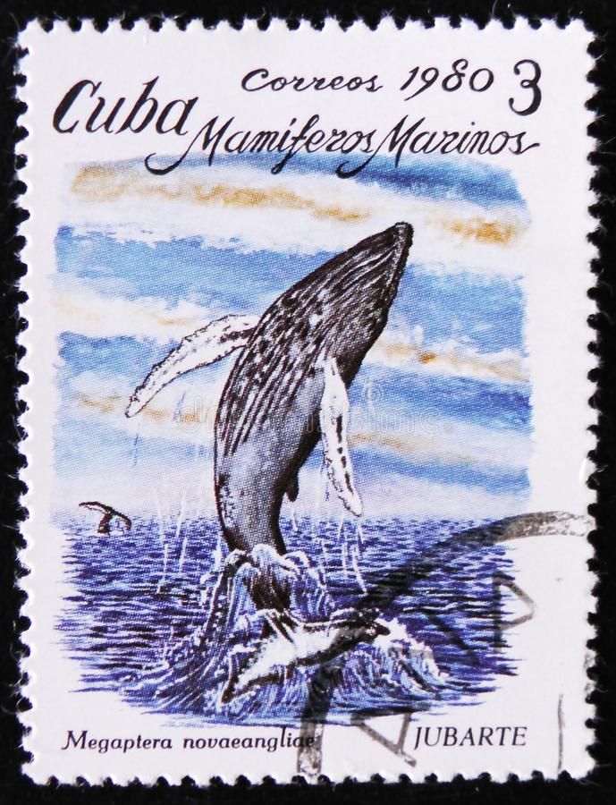 Megaptera novaeangliae, the series `Marine Mammals`, circa 1980. MOSCOW, RUSSIA - APRIL 2, 2017: A post stamp printed in Cuba shows Megaptera novaeangliae, the stock images