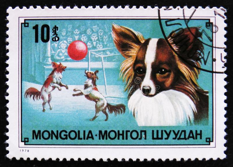 Chihuahua dog breed and dogs circus, circa 1978. MOSCOW, RUSSIA - APRIL 2, 2017: A post stamp printed in Mongolia shows Chihuahua dog breed and dogs circus stock photos