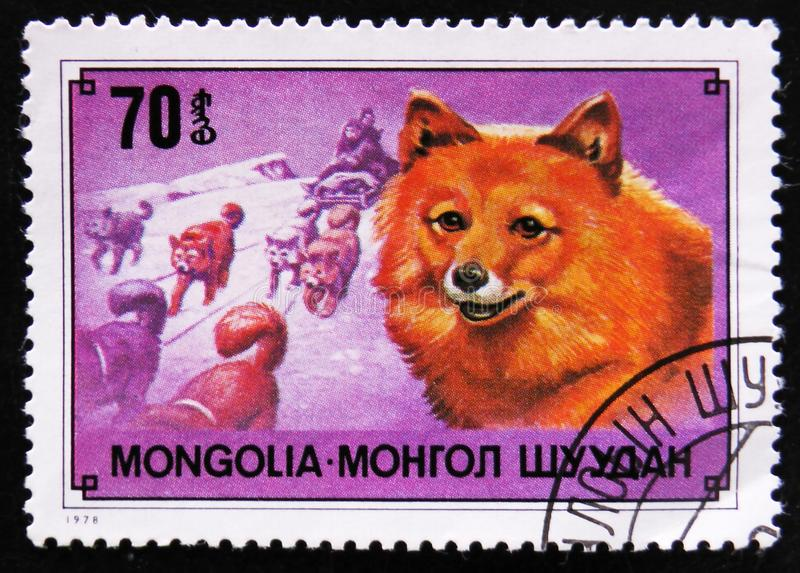 Chukchi reindeer dog breed and sledge , circa 1978. MOSCOW, RUSSIA - APRIL 2, 2017: A post stamp printed in Mongolia shows Chukchi reindeer dog breed and sledge royalty free stock image